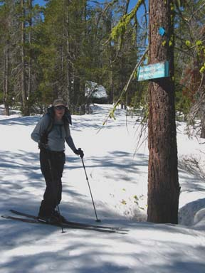 Image of skier on marked trail