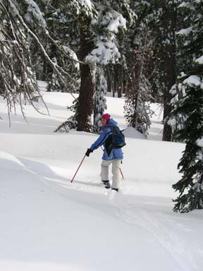 Image of skier in open area before entering dense trees.
