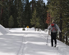 Image of skier on Crabtree Road